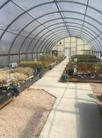 Low-Cost Seedlings Available for Spring Planting